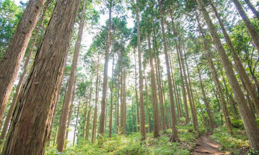 森林保全活動